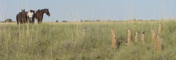 Botswana – Kalahari Safari teaser