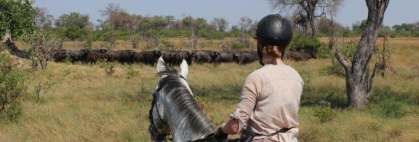 Botswana – Motswiri Camp teaser
