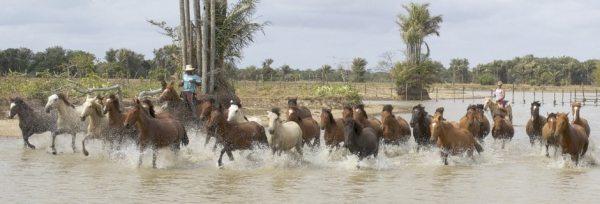Brasilien - Amazon Deltaet teaser