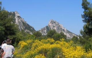 Frankrig - Provence