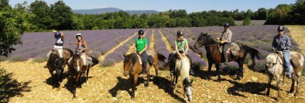Frankrig - Provence teaser