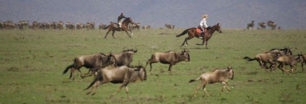 Kenya - Masai Mara teaser