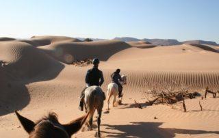 Marokko - Heste, Sandklitter & Nomader