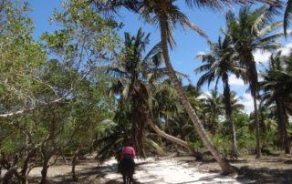 Mozambique - Tropisk Sand