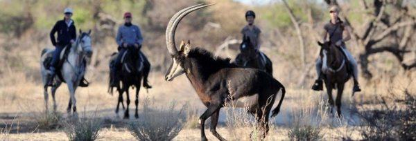 Namibia - Okapuka teaser