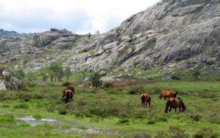 Portugal – Ulve & Vilde Heste