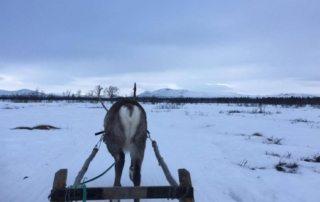 Sverige - Laplands Oplevelser