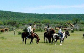 Sydafrika - Ant´s Lodges teaser