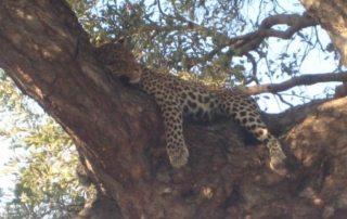 Sydafrika & Botswana – Afrika Explorer