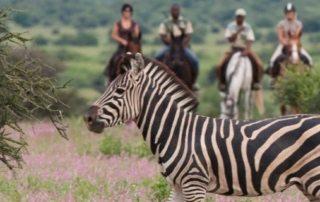 Sydafrika & Botswana – Afrika Explorer teaser
