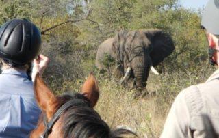 Sydafrika - Wait a Little