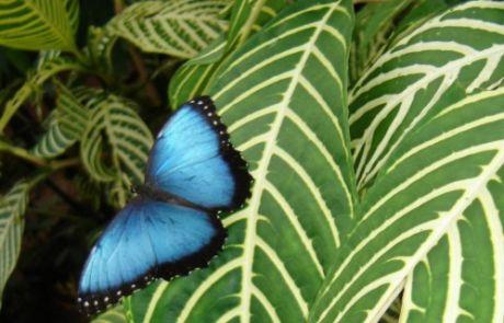 Costa Rica – Vildmarksridt teaser
