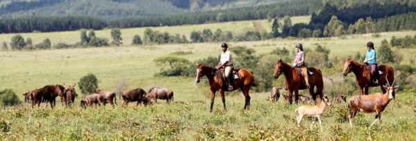 Swaziland - Mlilwane Explorer Teaser